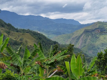 Finca La Despensa is located at 6,000 feet above sea level in the Andes Mountains of Colombia, South America.