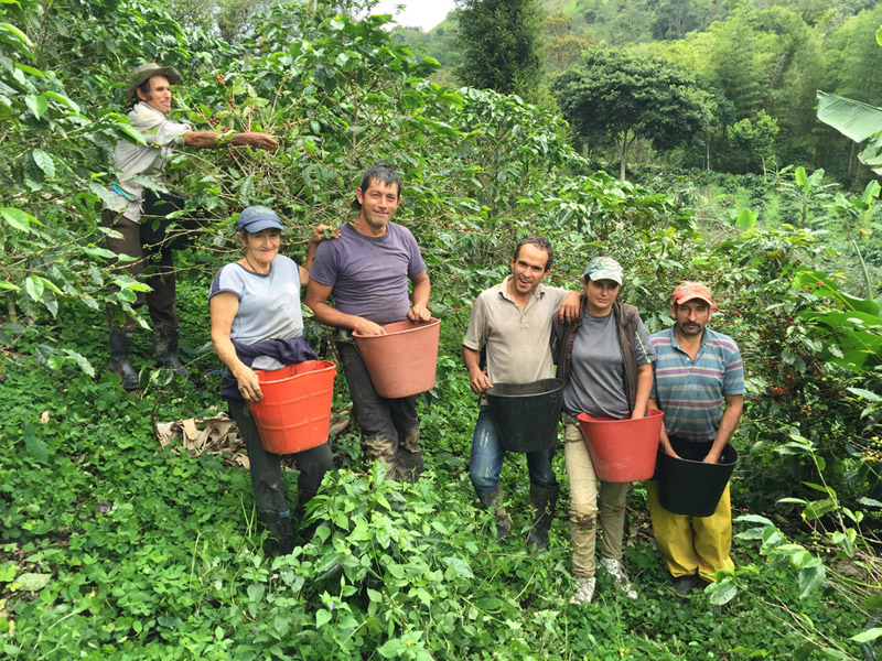 On any given day at Finca La Despensa during harvest time, you will find 3 to 6 local farmers assisting in the coffee harvest.